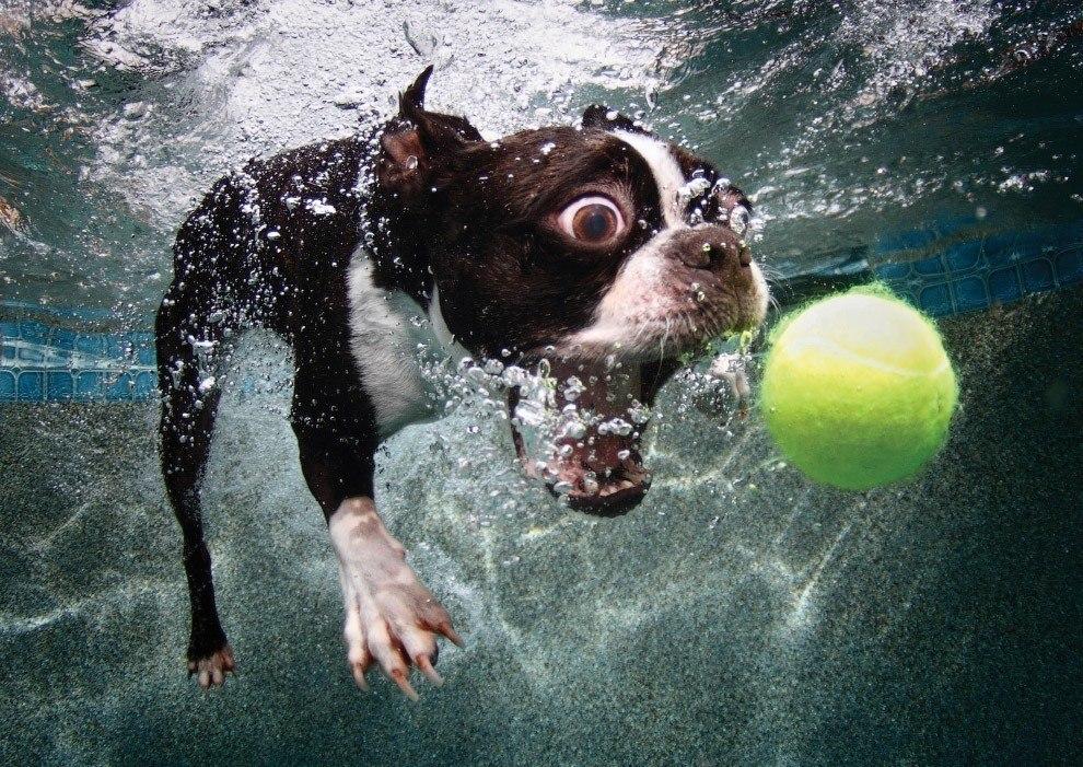 собака плавает под водой