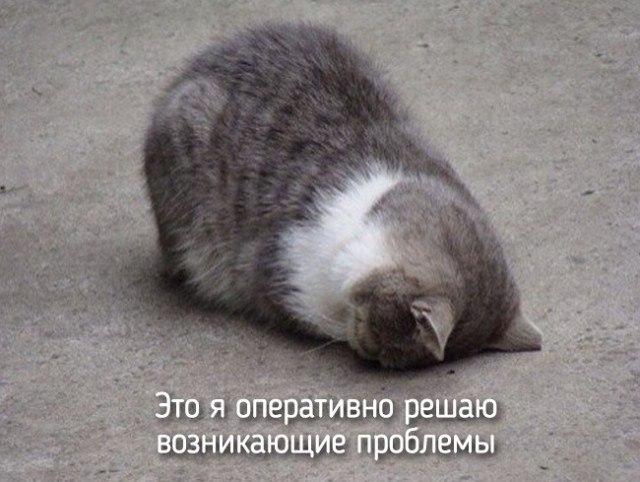 Смешные картинки о животных с надписями