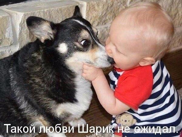 прикольные фотки собак