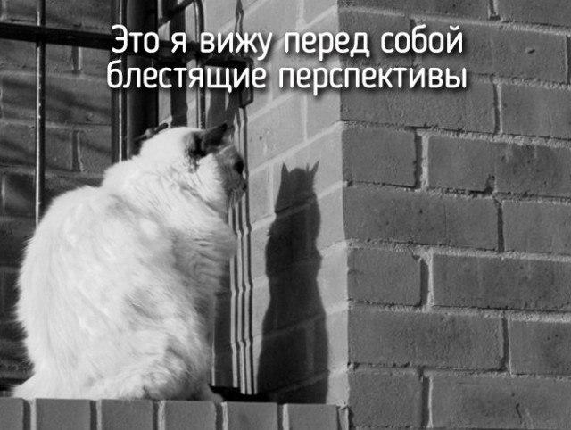 фотоприколы про животных