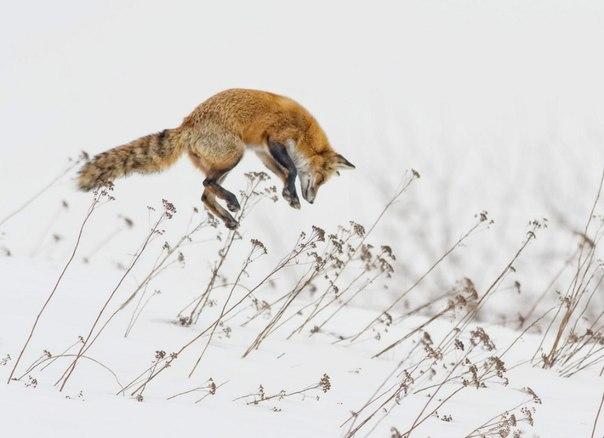лесные звери зимой