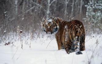 звери зимой в лесу