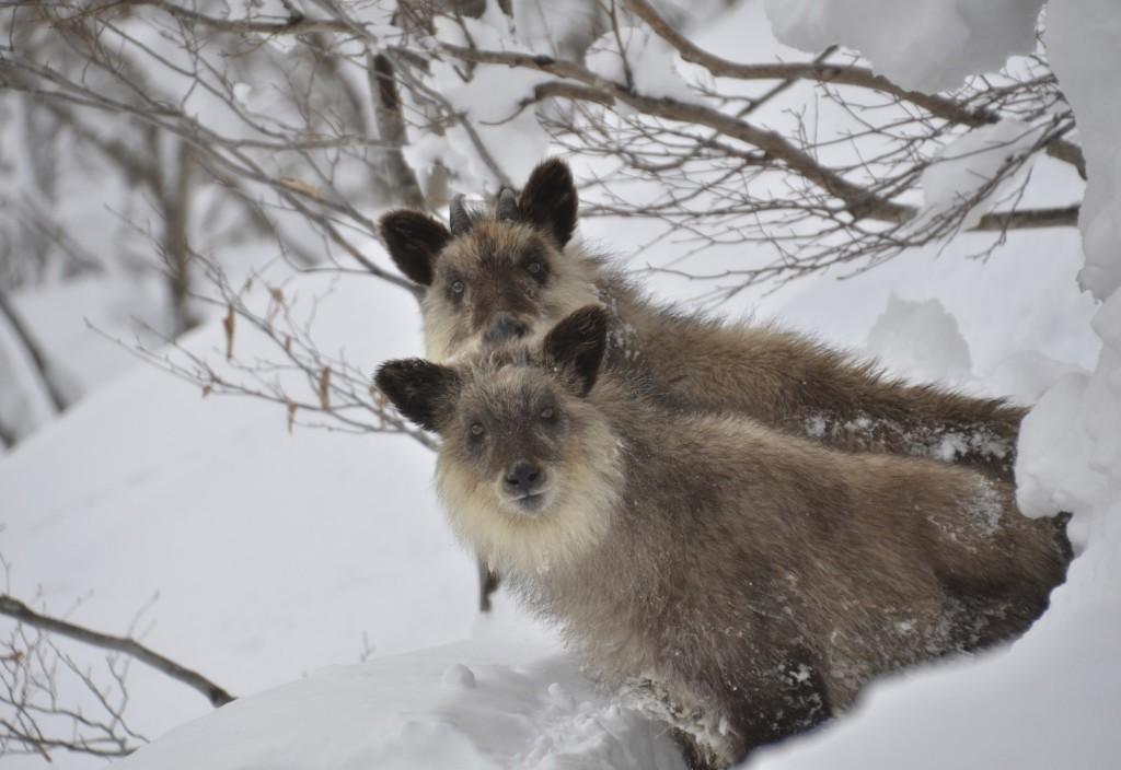 жизнь зверей зимой