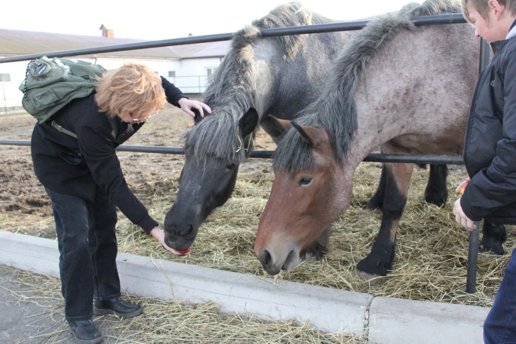 самые красивые лошади фотографии