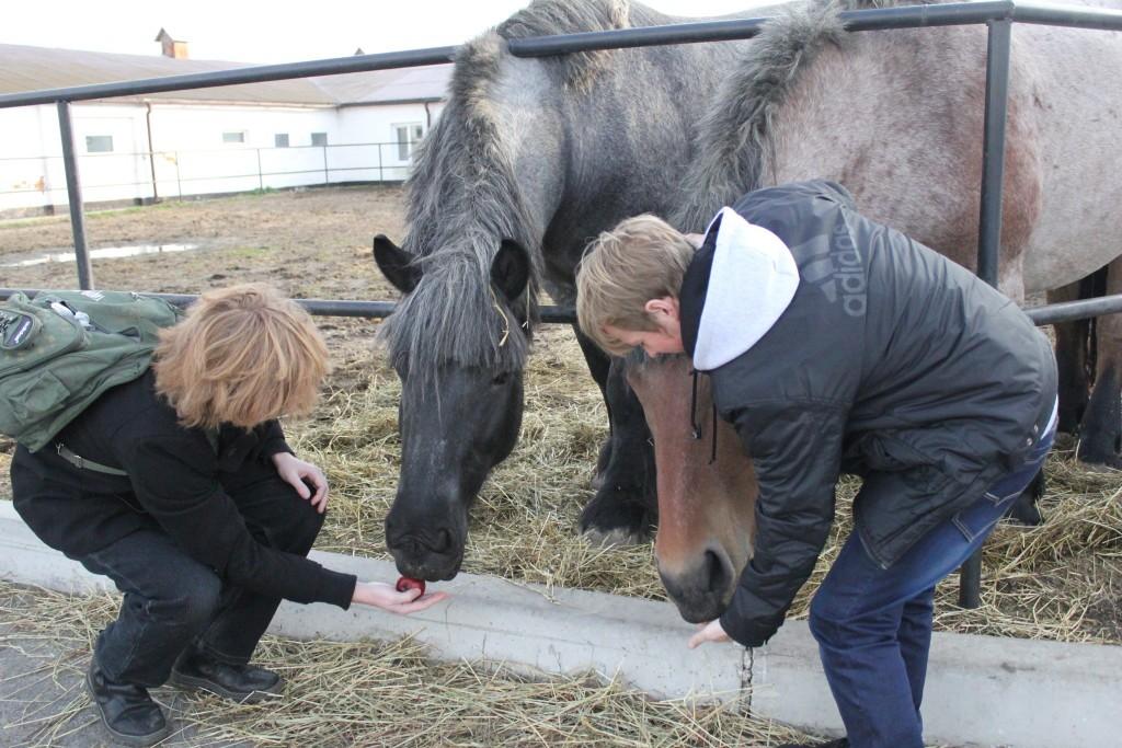 лошади фото красивые