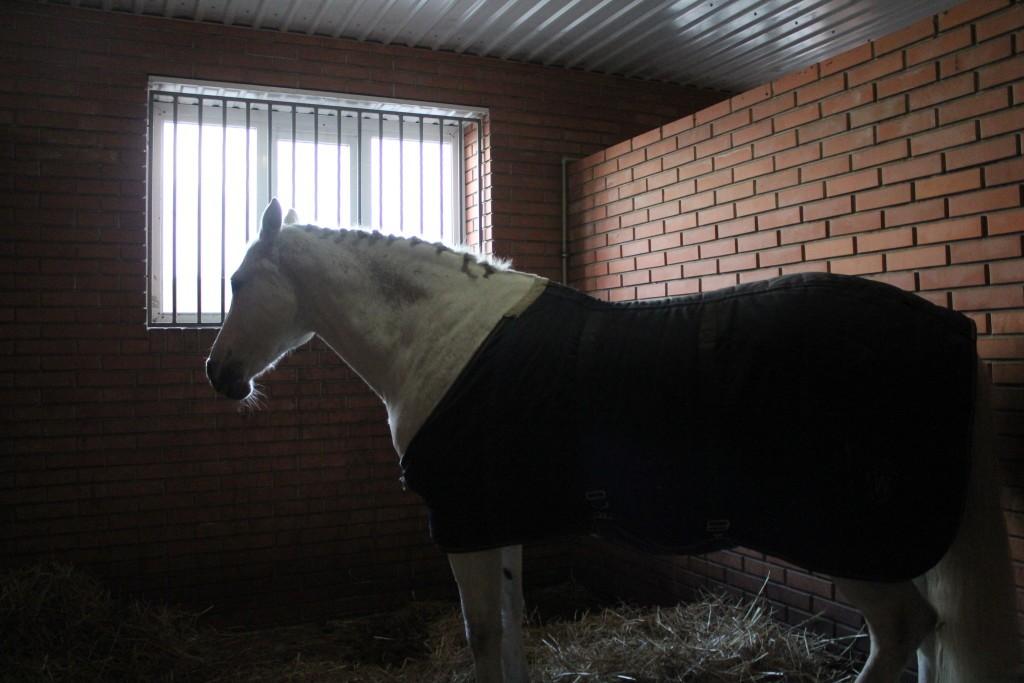 красивые лошади фото