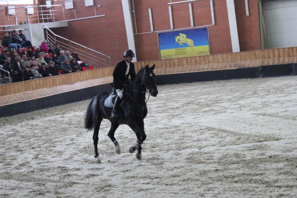 красивые лошади племенные