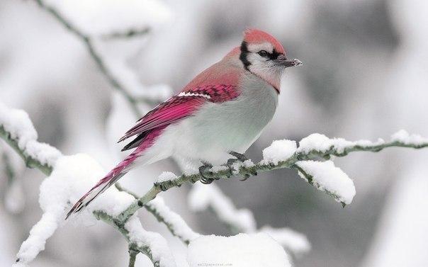 музыкотерапия, пение птиц