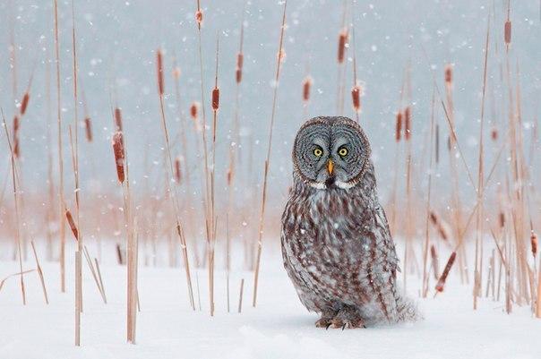 звери и птицы зимой