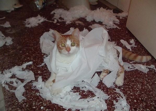 коты разрушители