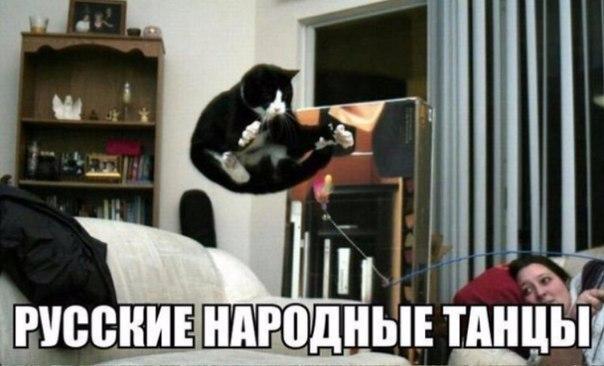 фото кошек котов