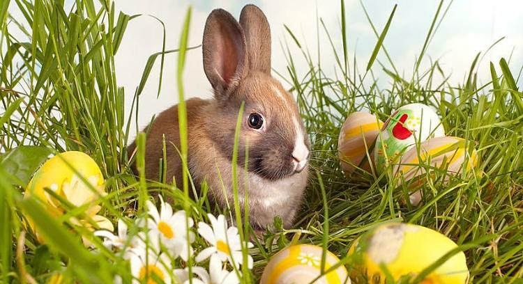 кролик на Пасху