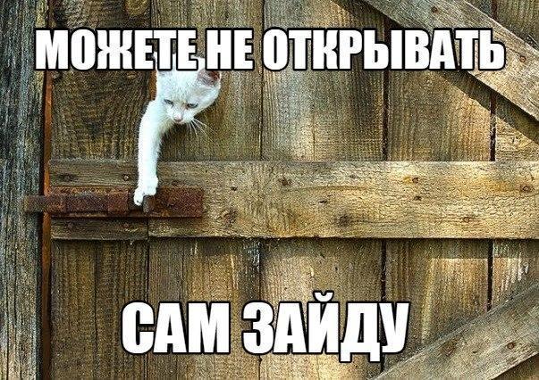 фотографии котят