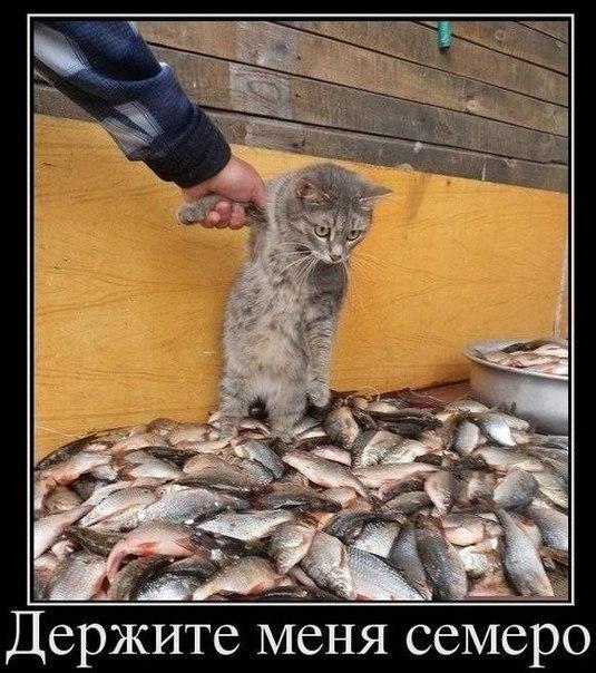 приколы про животных