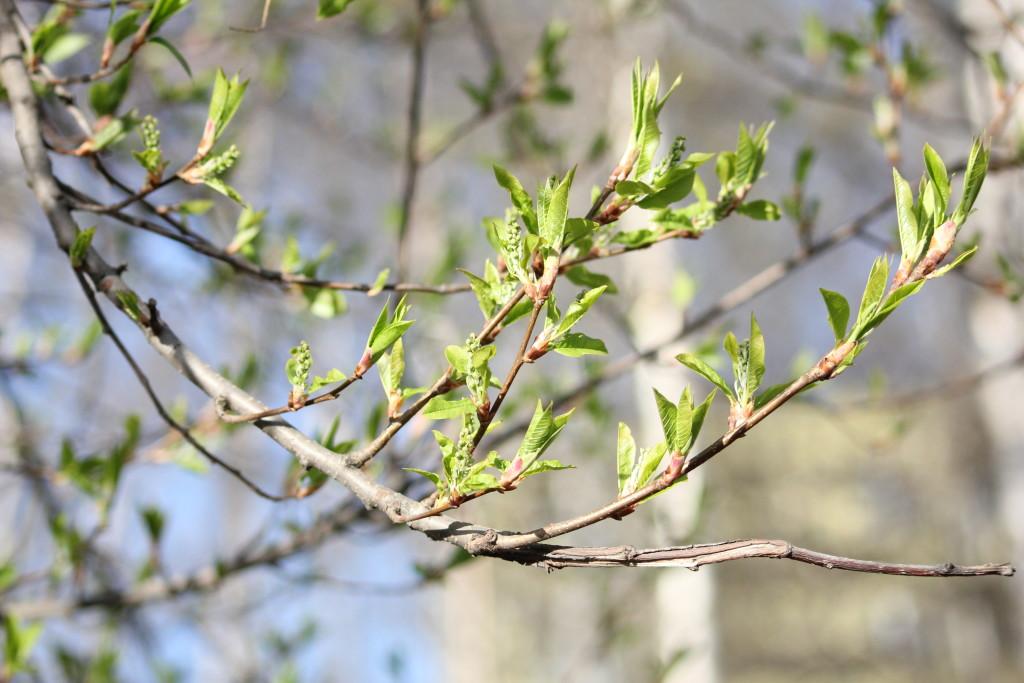 Ранняя весна, природа