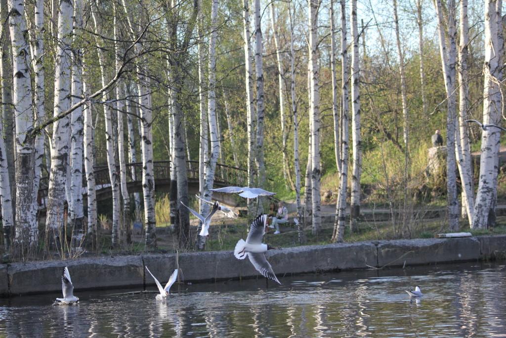 парк, Петрозаводск