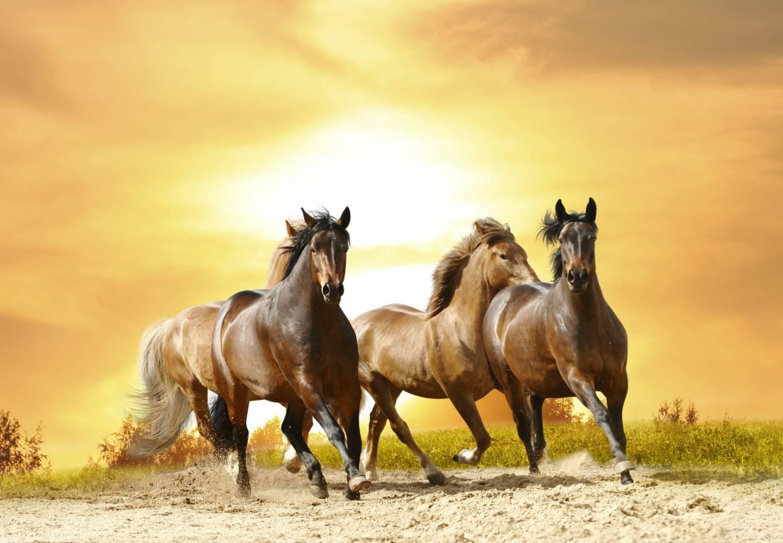 красивые картинки фото лошади