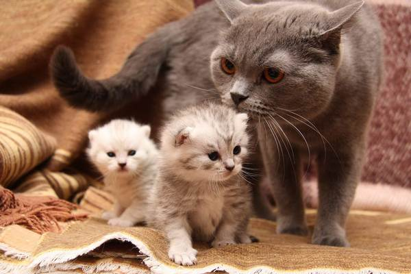 красивые котята  с кошкой