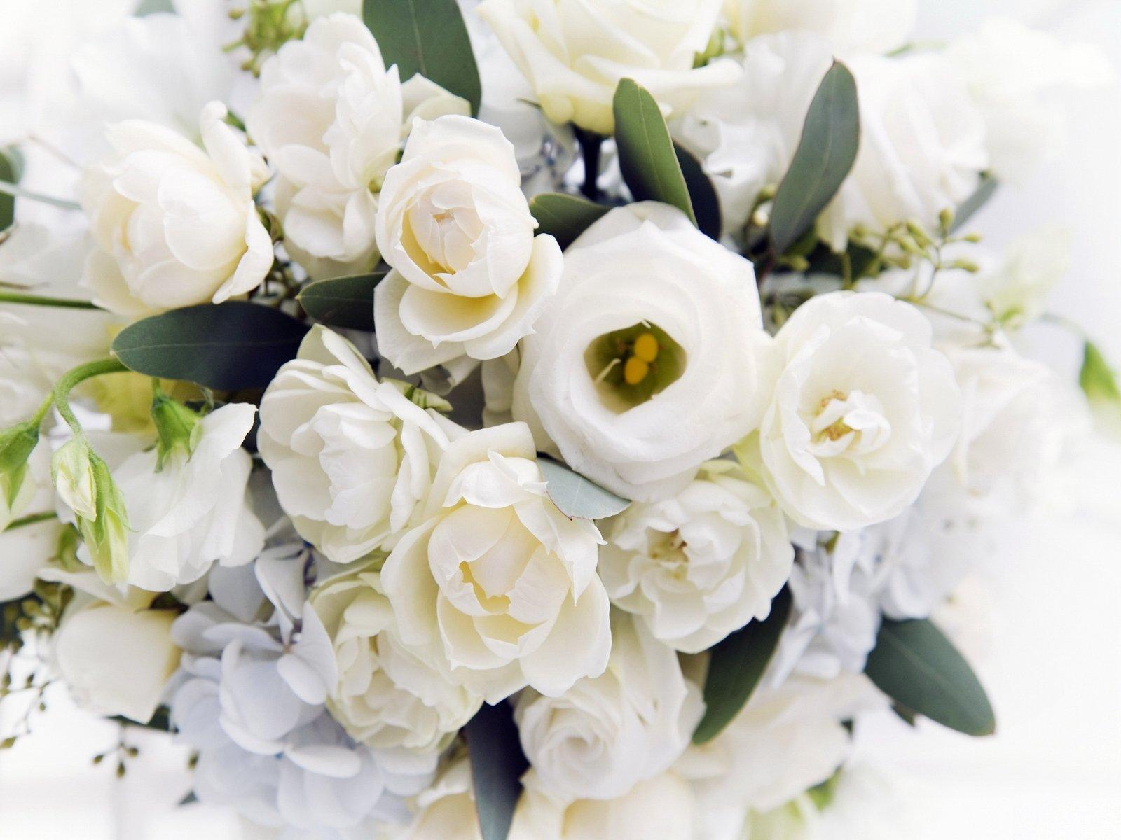 Фотки белые розы