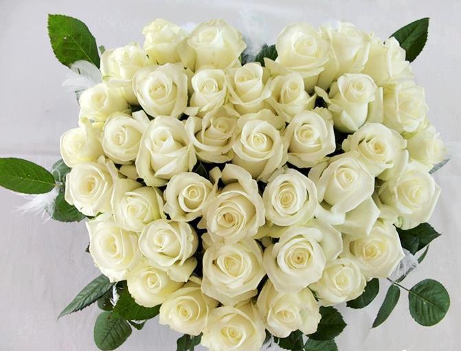 Картинки красивые много роз
