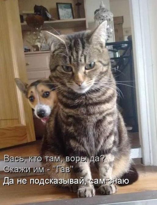 прикольное фото котов