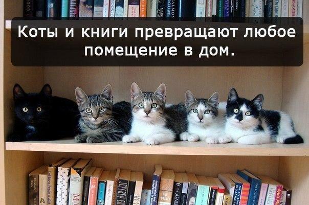 прикольные картинки с кошками
