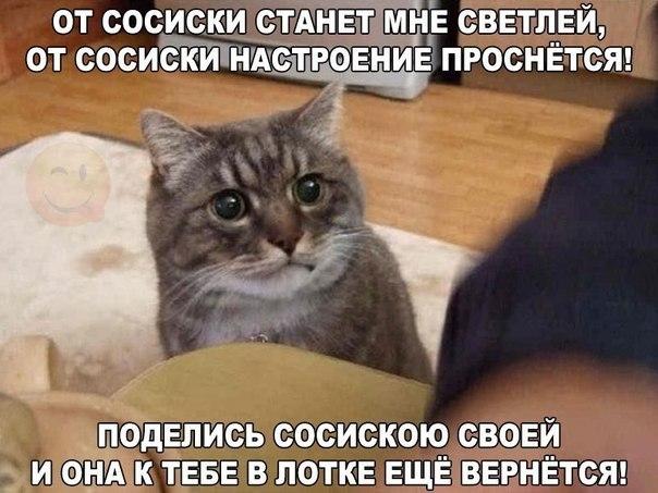 Смешные фото с котами и надписями 2017
