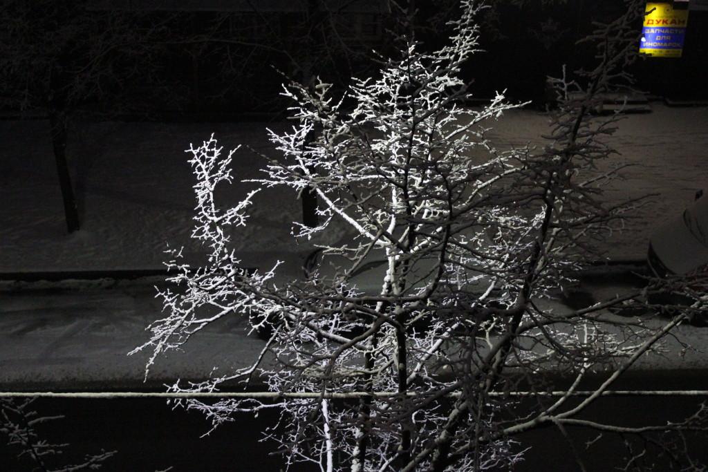 снег на дереве, зима