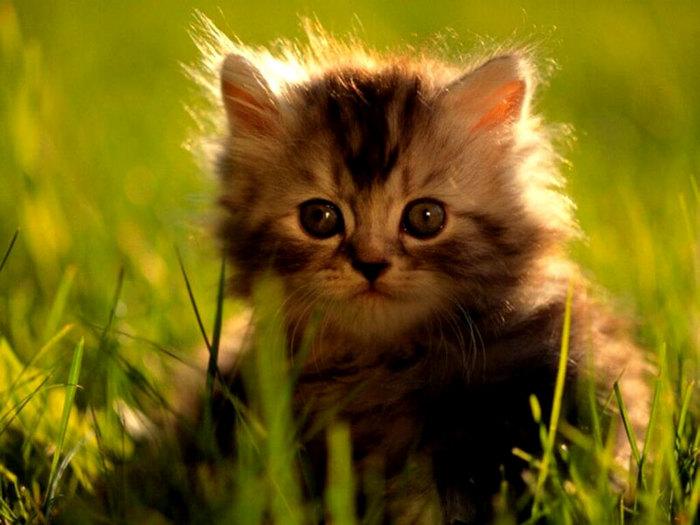 пушистые котята фотопушистые котята фото