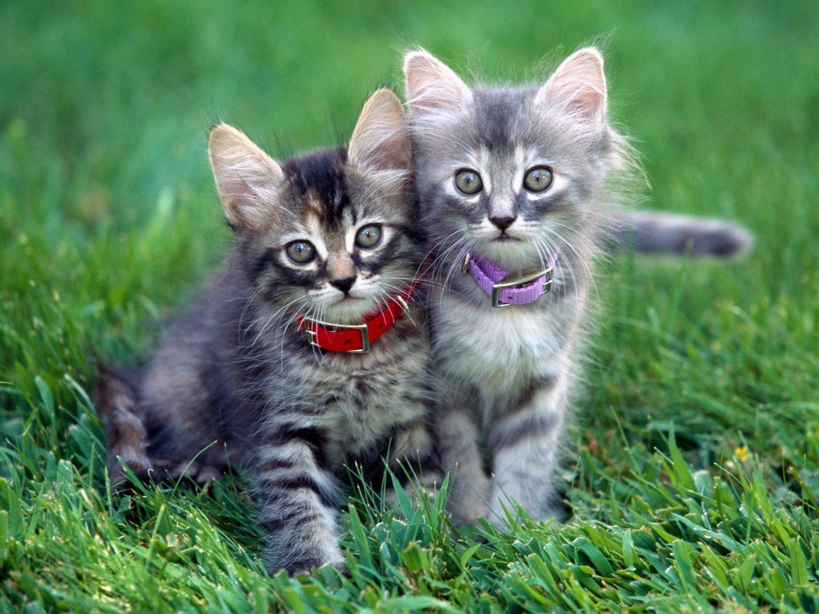 Красивые картинки с котятами скачать