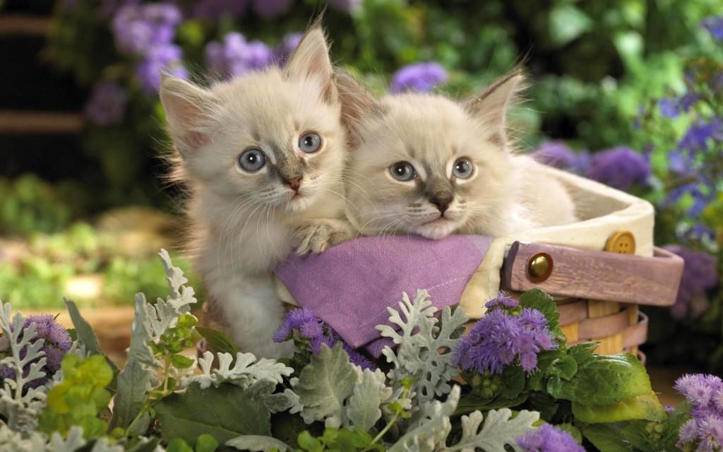 смешные маленькие котята