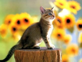 красивые маленькие котята