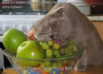 Смешные фото котов и кошек, которые едят