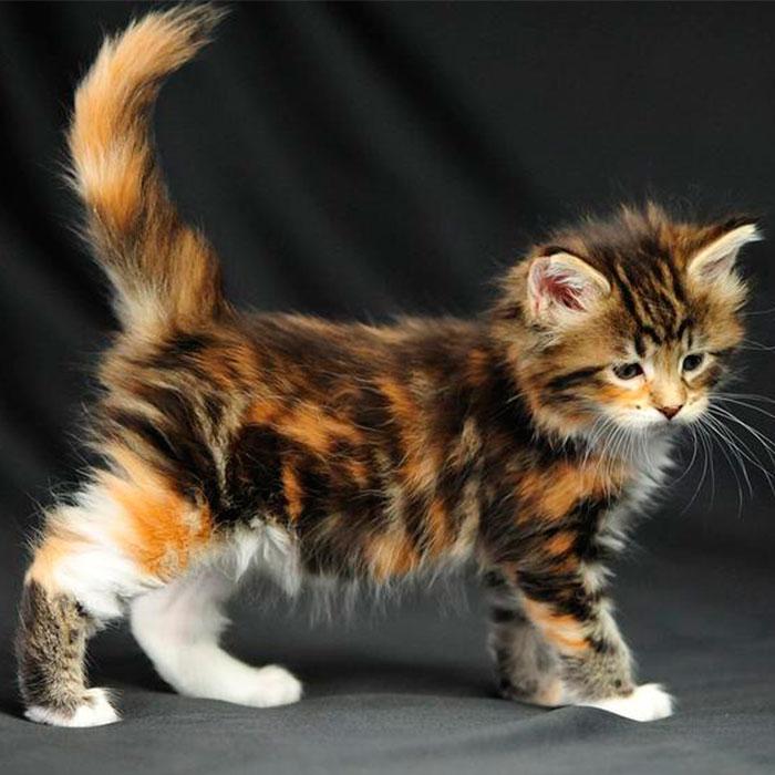 красивые котята фото