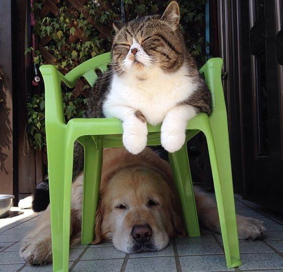 прикольные картинки про собак и кошек