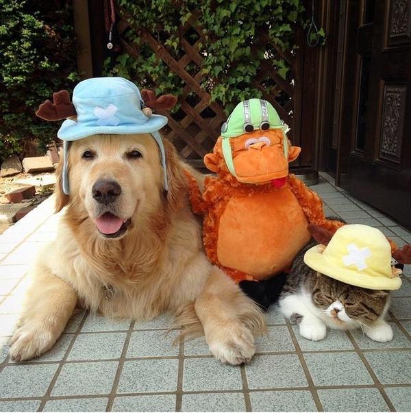 кот и собака фото
