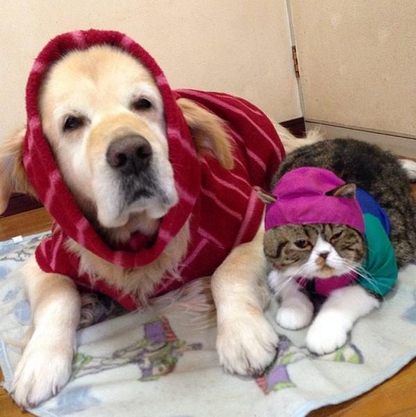 собака Оливер и кот Араши
