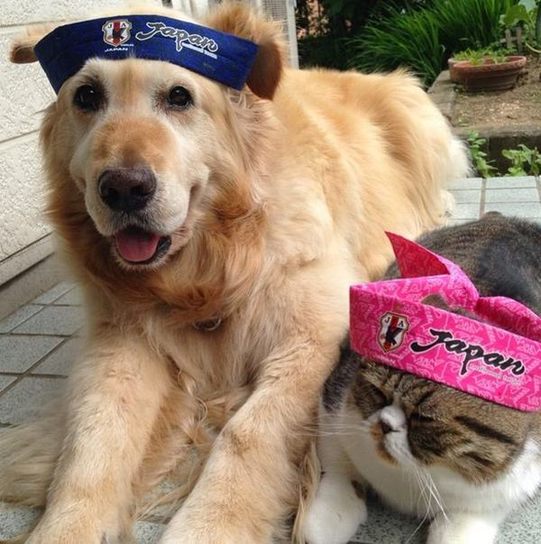 картинки котики и собаки