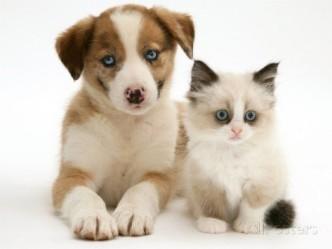 фото кошек и собак