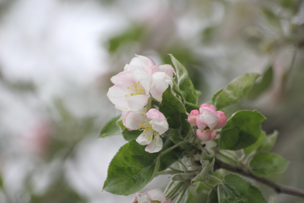 нежные весенние цветы