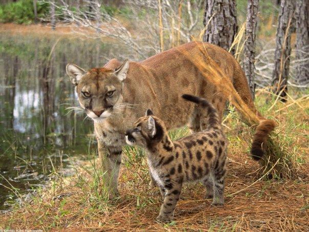 фото кошек и котят