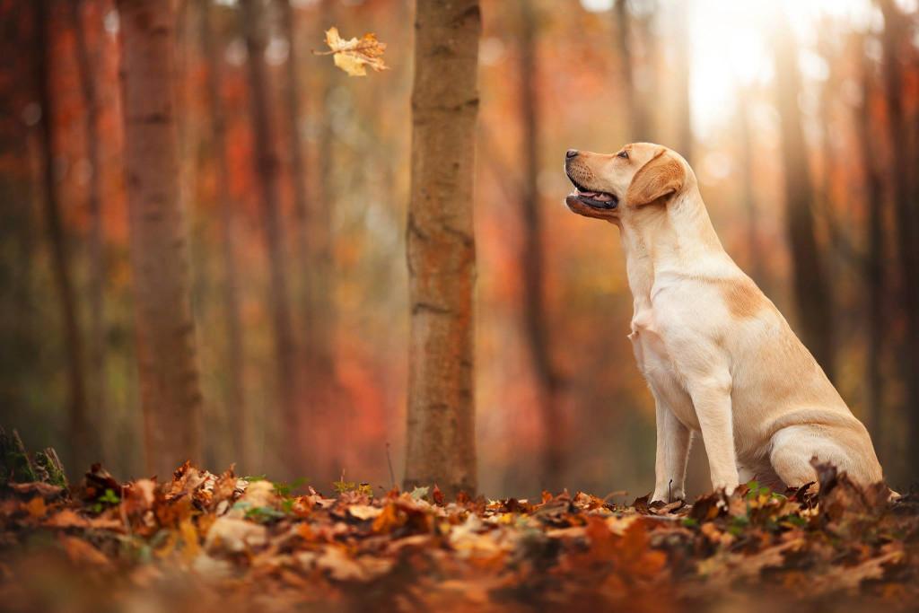 фото собак осень