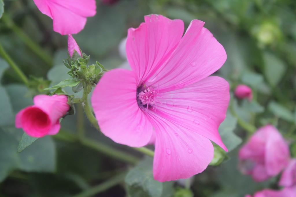 цветы Карелии, фото