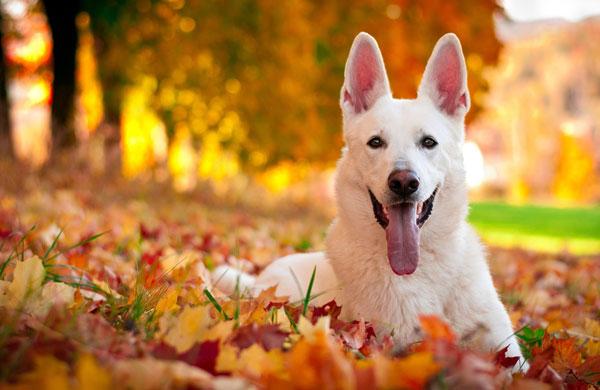 осенние фото собак