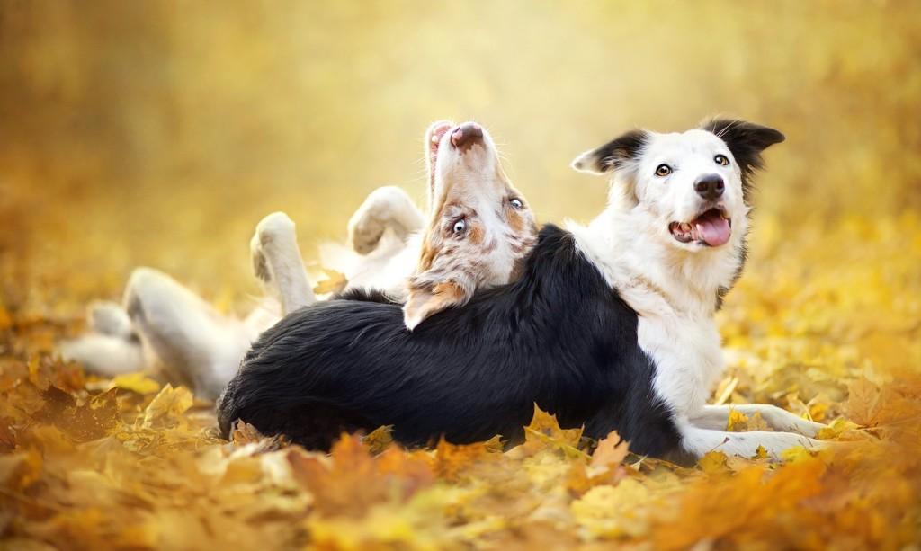 собаки осень фото
