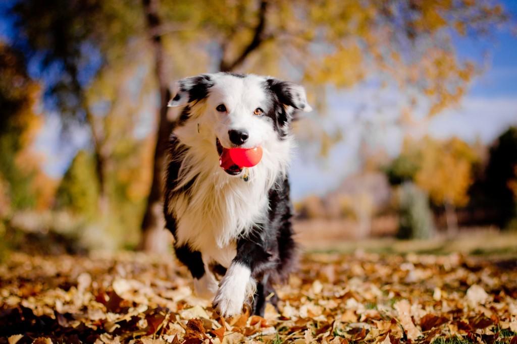 осень фото, собаки