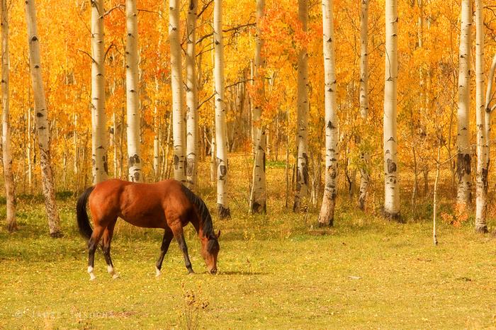 красивая осень, лошадь
