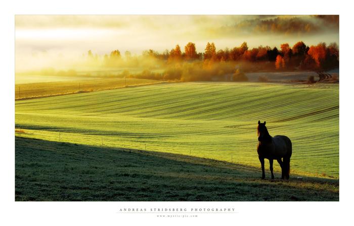 Красивые фото лошади осенью