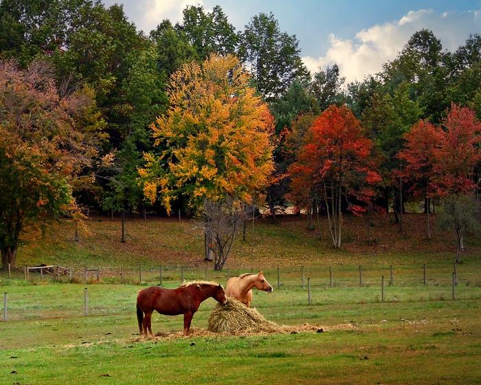 осень, лошади, фото