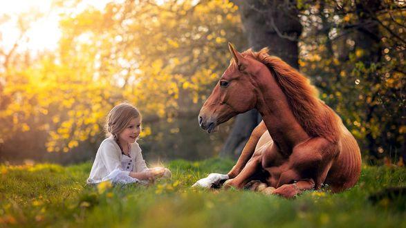 лошадь осень